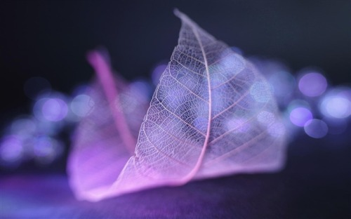 Transparent_leaf_vein_abstract_wallpaper_medium