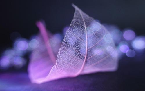Transparent_leaf_vein_abstract_wallpaper_medium